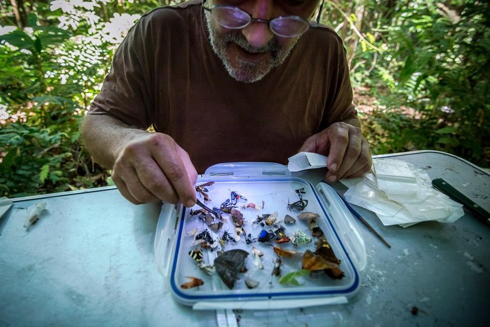 Entomologista observa insetos do Parque Amazônico da Guiana, na Guiana Francesa — Foto: Guillaume Feuillet/Parc amazonien de Guyane