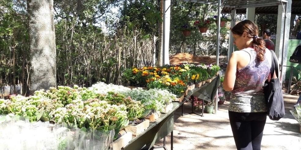 38c9a90e7132 Horto Municipal de Cabo Frio, RJ, receberá 5ª Festa das Orquídeas e ...