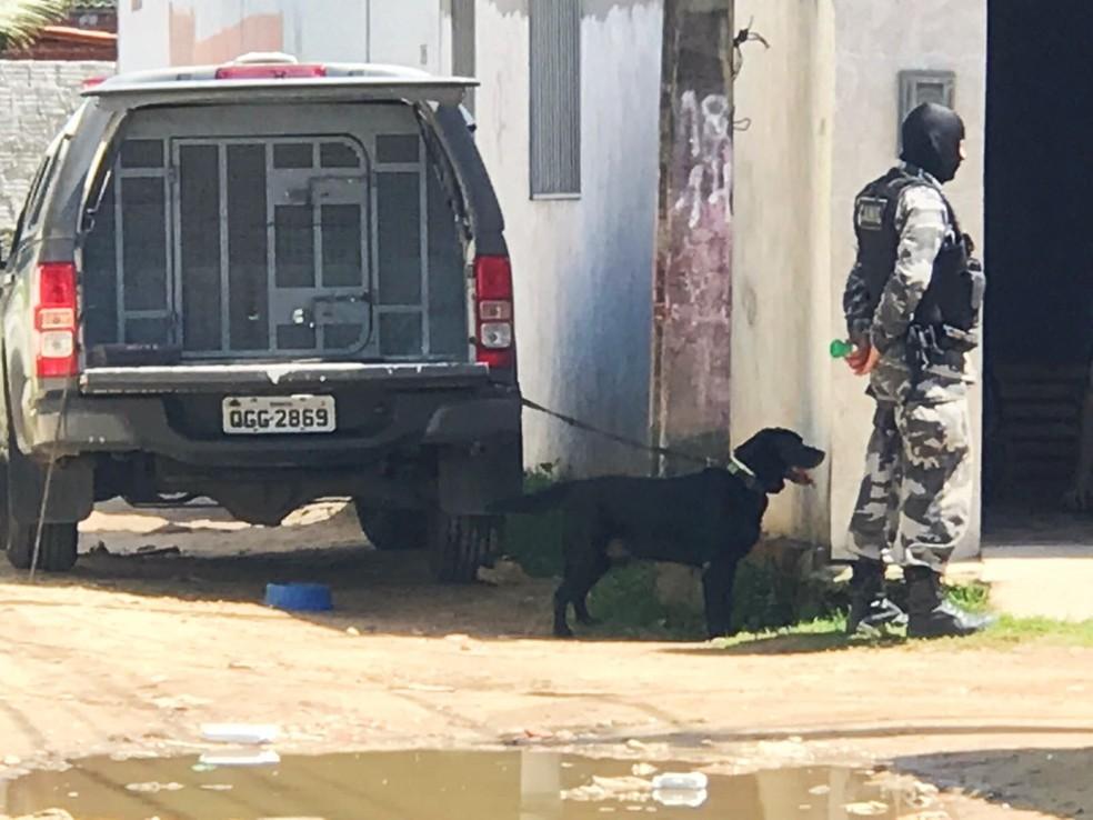 Cães farejadores do BPChoque ajudaram nas buscas  (Foto: Kleber Teixeira/Inter TV Cabugi)