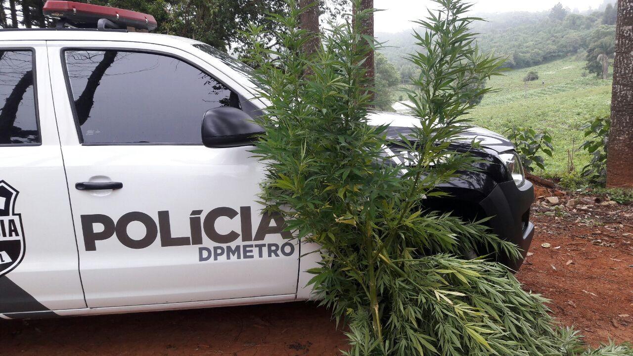Operação da Polícia Civil prende 34 pessoas e apreende 4 adolescentes em cidades do Paraná