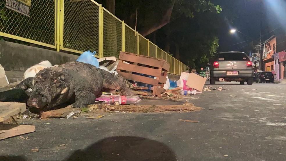 Corpo de jacaré estava entre lixo jogado em calcada de Avenida, em Manaus. — Foto: Patrick Marques/G1 AM