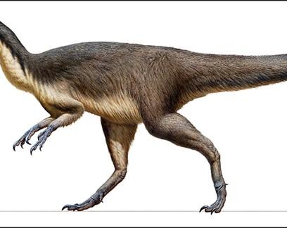 Penas fossilizadas revelam como os dinossauros se aqueciam