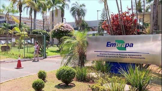 Governo propõe cortar 45% do orçamento da Embrapa em 2020