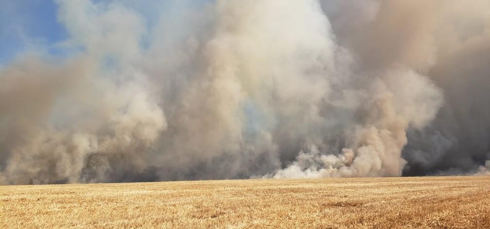 Incêndio destruiu mais de 800 hectares em Paranatinga (MT) — Foto: Corpo de Bombeiros