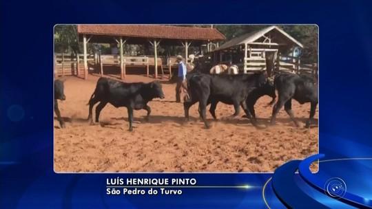 Criminosos furtam novilhas e vacas de sítio em São Pedro do Turvo
