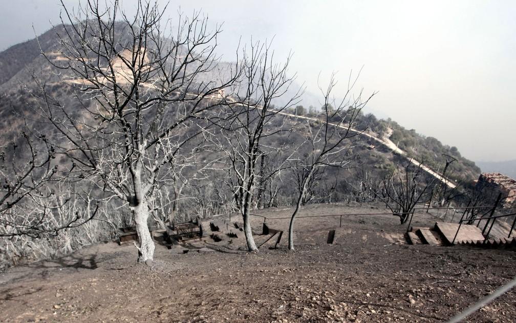 Árvores queimadas perto de Tizi Ouzou, a cerca de 100 km de Algiers, na Argélia, em foto desta terça-feira (10) — Foto: AP Photo/Fateh Guidoum