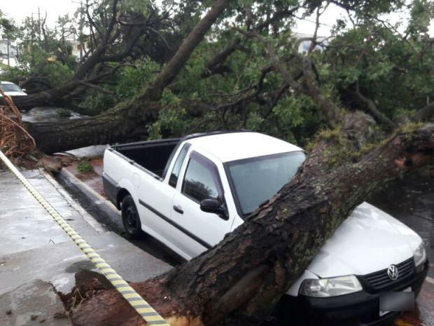 Árvore caiu em cima de carro em Jaú (Foto: Arquivo Pessoal)