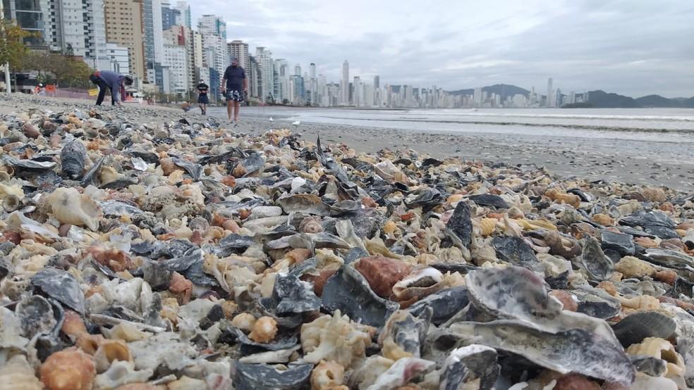 Conchas em Balneário Camboriú — Foto: NSC/Divulgação
