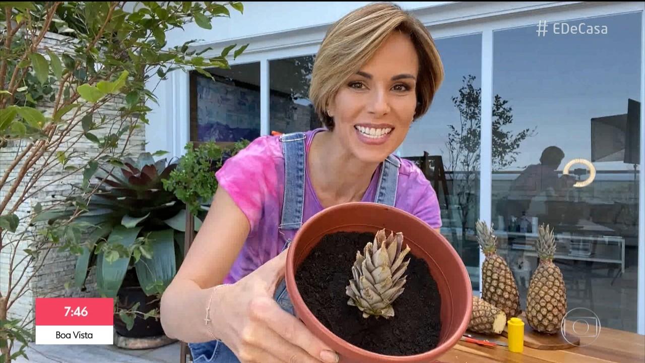 Aprenda a plantar mamão e abacaxi
