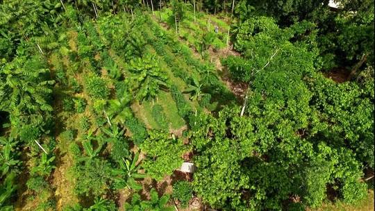 Conheça a agricultura sintrópica
