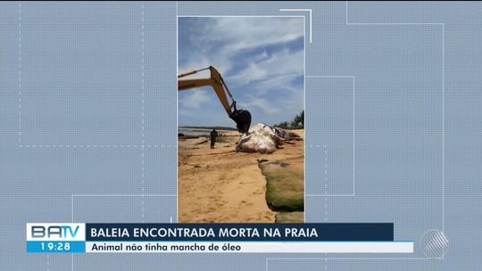 Baleia encontrada morta em praia do extremo sul da Bahia é enterrada