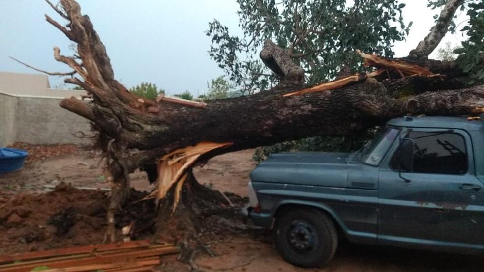 Árvore desabou em carro — Foto: Maycon Monteiro/Divulgação