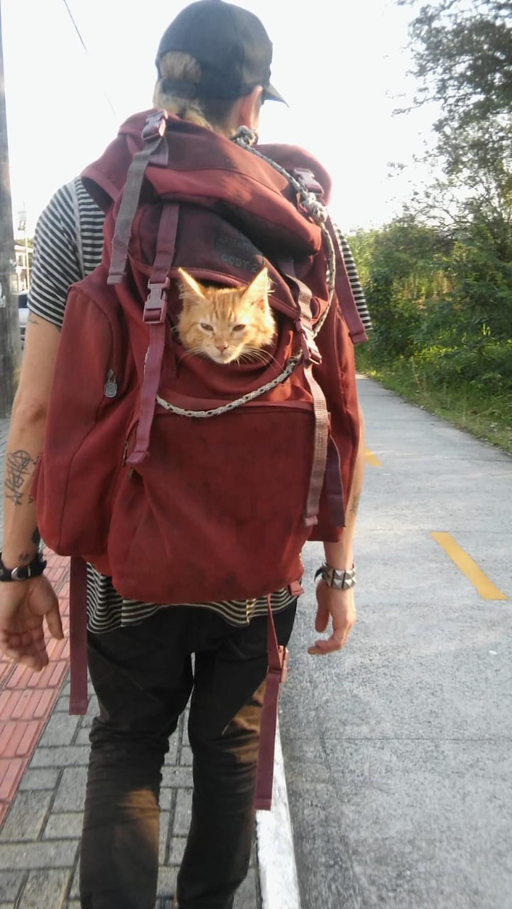 Adotado por artista de rua e transportado em mochila, gato chama a atenção em Florianópolis
