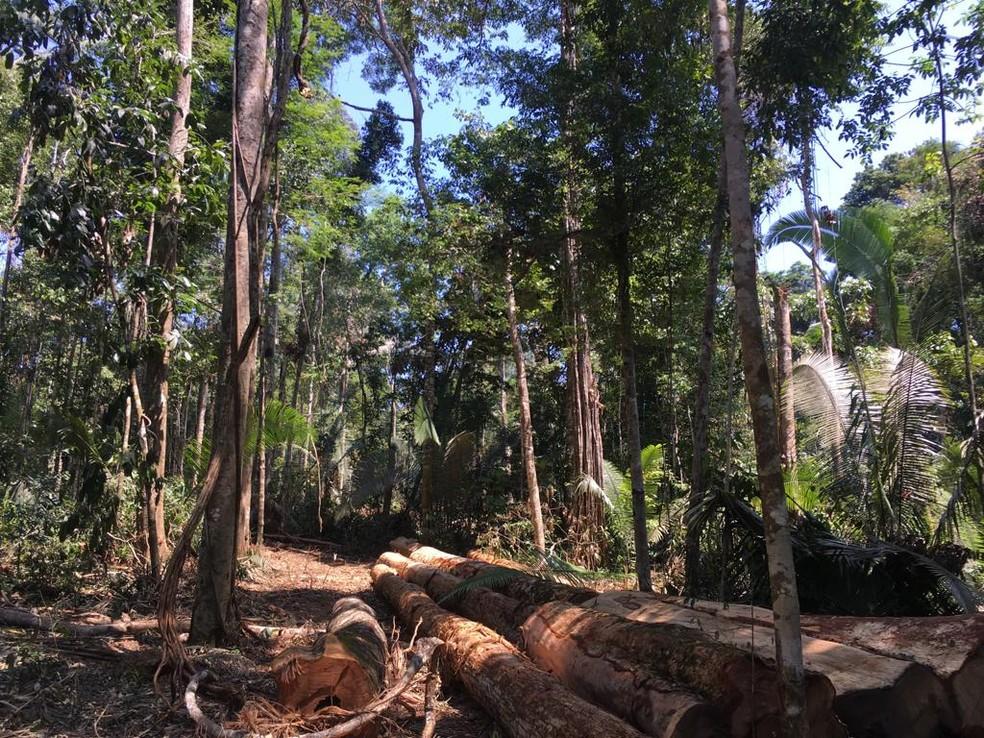 Operação Kuraritinga foi realizada na região de União Bandeirantes, RO — Foto: PF/Divulgação