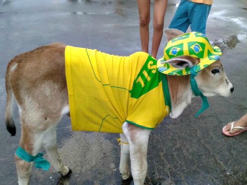 Bezerro Neymar foi mascote da família na Copa de 2014 e morreu após o mundial  (Foto: Vanísia Nery/ G1/Arquivo)