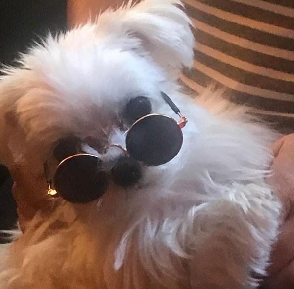 Heather Locklear publicou no sábado (18) uma foto de seu cão maltês chamado Mister (Foto: Reprodução/Instagram)
