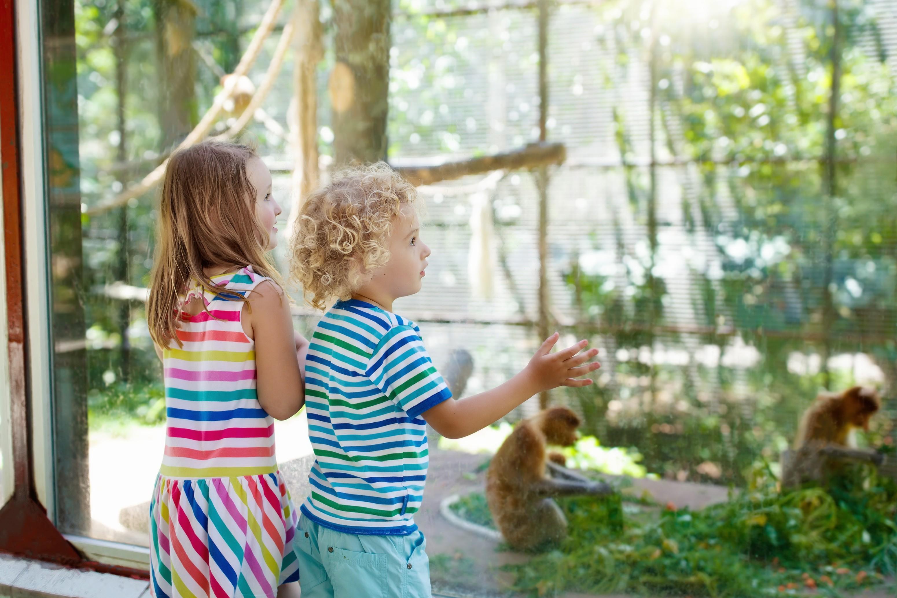 A técnica utilizada para dar risada é comum entre macacos e bebês pequenos (Foto: Thinkstock)