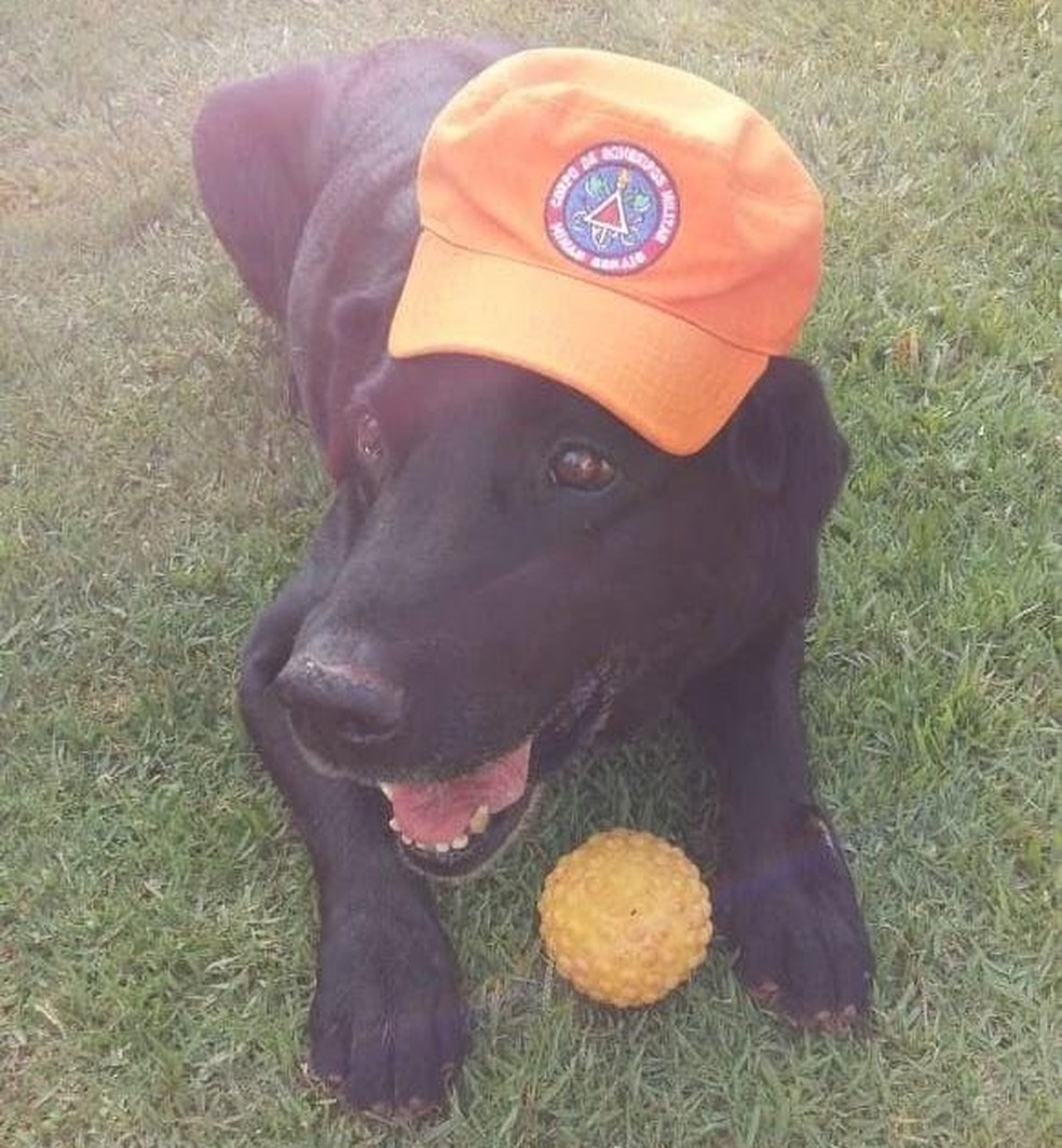 Cão Luck em seu descanso em Uberaba  — Foto: Corpo de Bombeiros/Divulgação