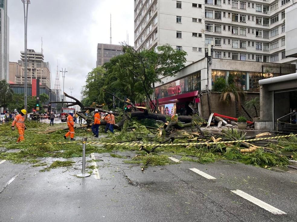 Árvore de grande porte cai em cima de carro na Avenida Paulista na tarde desta quinta, 19 de novembro — Foto: Abraão Cruz/TV Globo