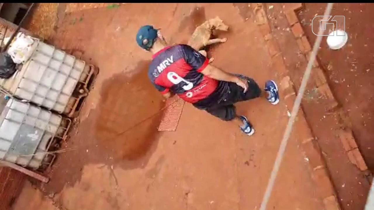 Homem é filmado batendo em cachorros, no Paraná