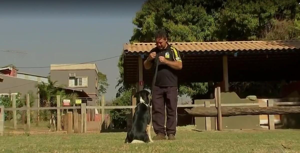 Adestramento pode fortalecer laços entre cães e donos e ajuda no comportamento do pet