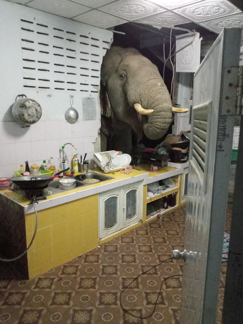 Elefante procura comida na cozinha de casa em Pa La-U, Hua Hin, na Tailândia. A foto foi tirada pela dona do imóvel, Radchadawan Peungprasopporn, em 20 de junho de 2021. — Foto: Radchadawan Peungprasopporn/Facebook/AFP