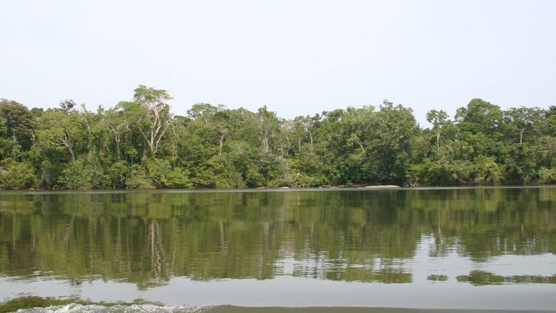 Fundo Amazônia já arrecadou R$ 3 bilhões desde sua criação, em 2008. (Foto: Roberto Konda/Ed. Globo)