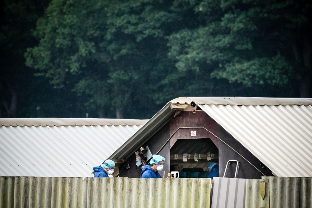 Fazendo de criação de visions em Deurne, na Holanda — Foto: AFP