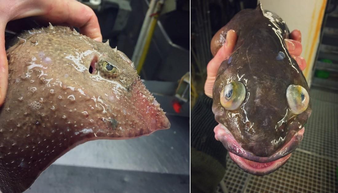 Outros exemplares pescados pelo barco russo
