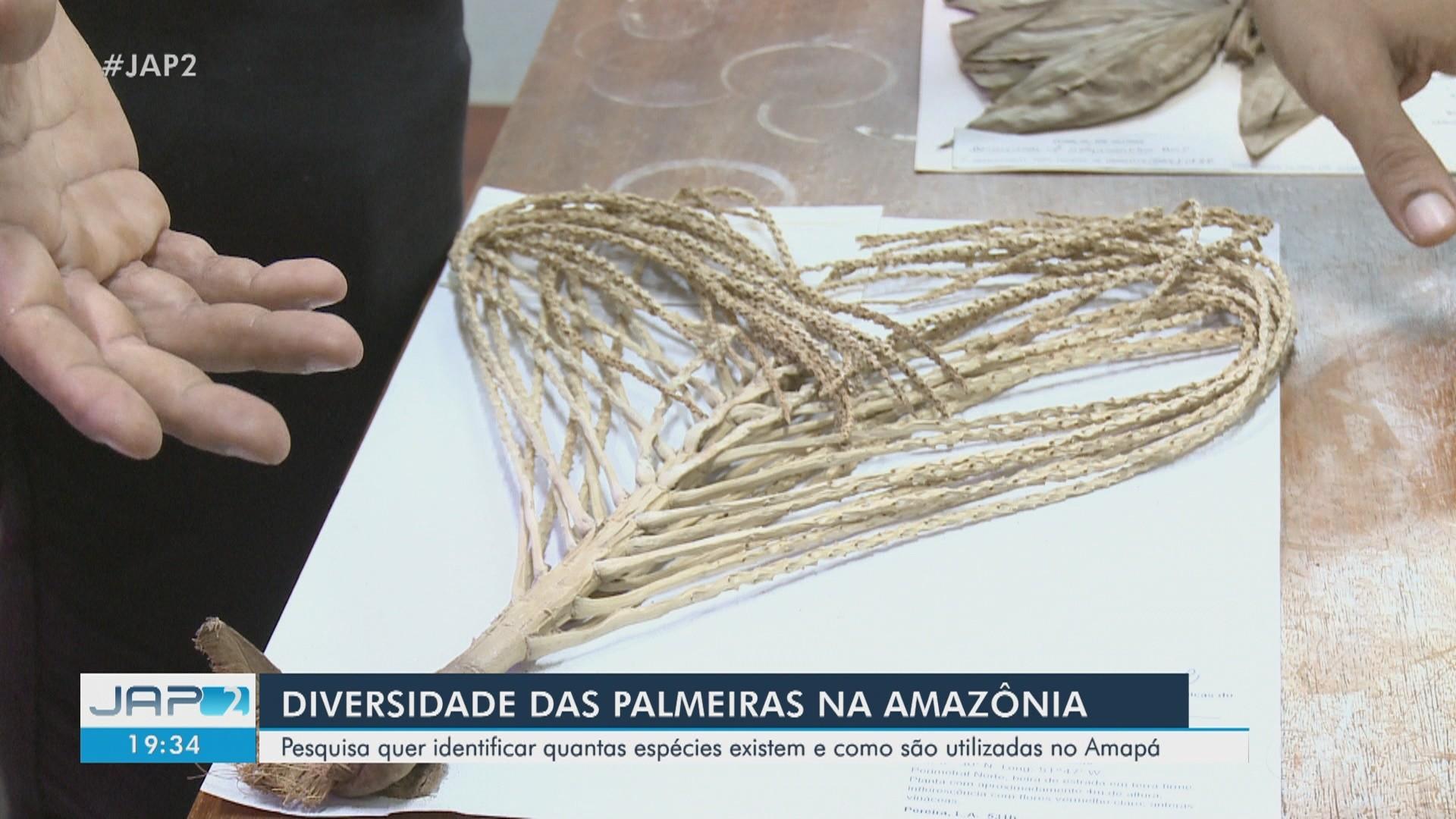 Com 48 palmeiras no herbário do Amapá, pesquisador aposta na existência de mais espécies