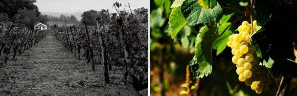 """""""Os vinhos brancos do Dão mostram grande qualidade"""", diz a sommelière Tita Moraes"""
