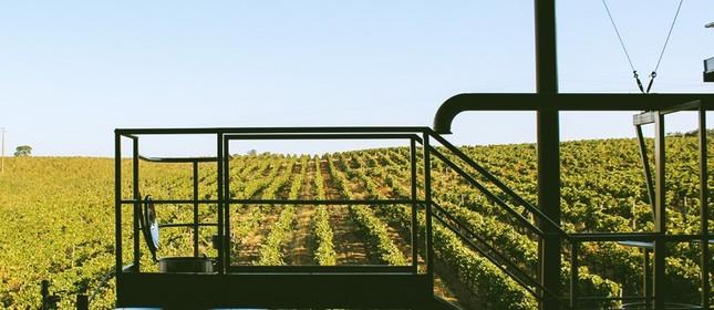 Na Herdade de São Miguel, as principais uvas plantadas são: Alicante Bouschet, Trincadeira, Aragonez e Touriga Nacional