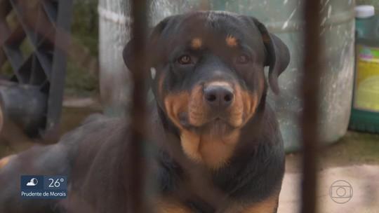 Menina de 2 anos atacada por cães morre em Belo Horizonte
