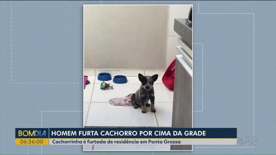 Dois homens furtam cachorro por cima da grade de uma casa em Ponta Grossa