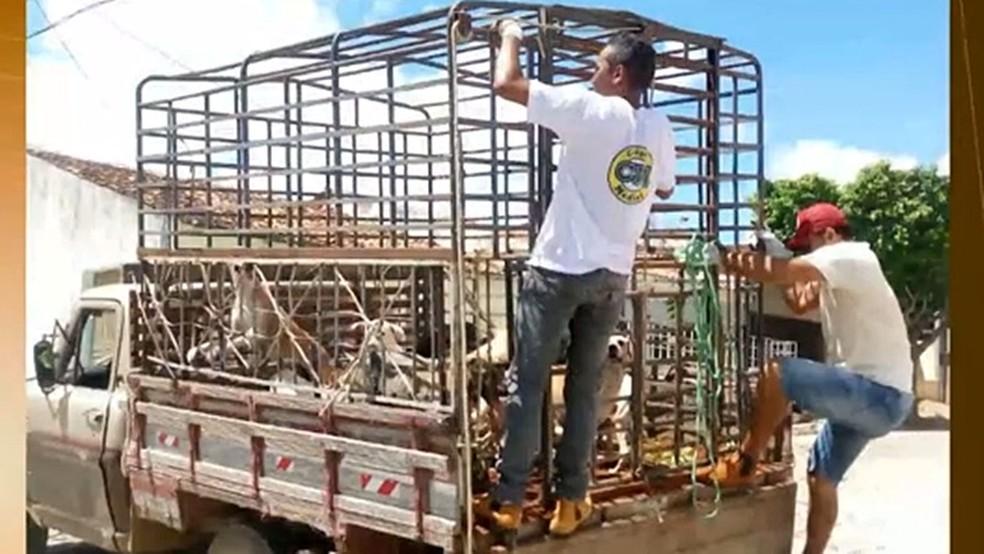 Cães foram sacrificados pela prefeitura de Igaracy, Sertão da Paraíba (Foto: Reprodução/TV Cabo Branco/Arquivo)