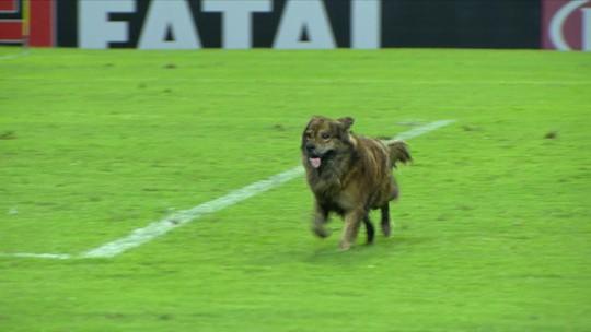 Cachorro invade o gramado na partida do CSA e Cruzeiro, e funcionário tenta pegar, mas cai
