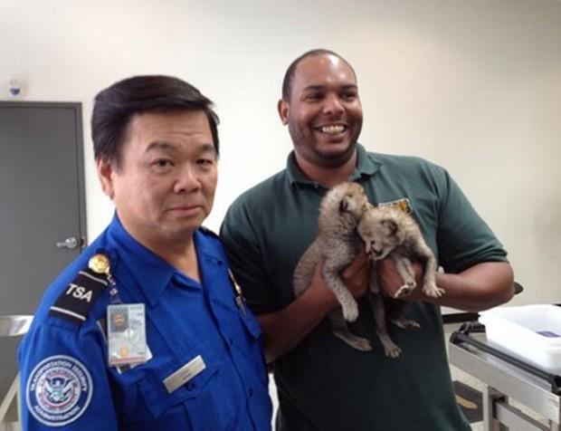 No Aeroporto Internacional Washington Dulles, na capital dos EUA, os oficiais impediram o embarque de dois filhotes de guepardo, que foram levados em segurança para o de Dallas, no Texas (Foto: Reprodução/Twitter/TSAmedia_LisaF)
