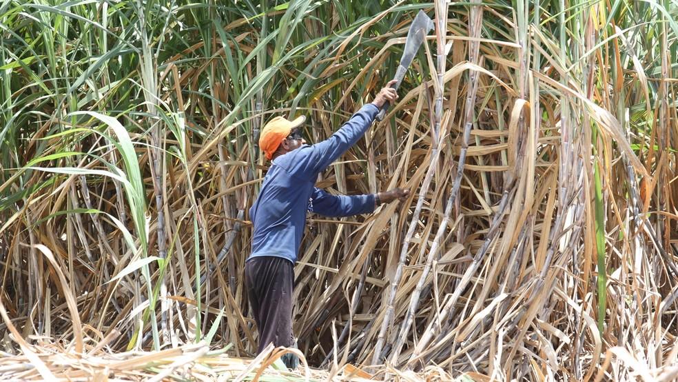 -  Canavial na Paraíba; Braskem vai testar cana-de-açúcar como matéria-prima para garrafa PET  Foto: Francisco França/Jornal da Paraíba