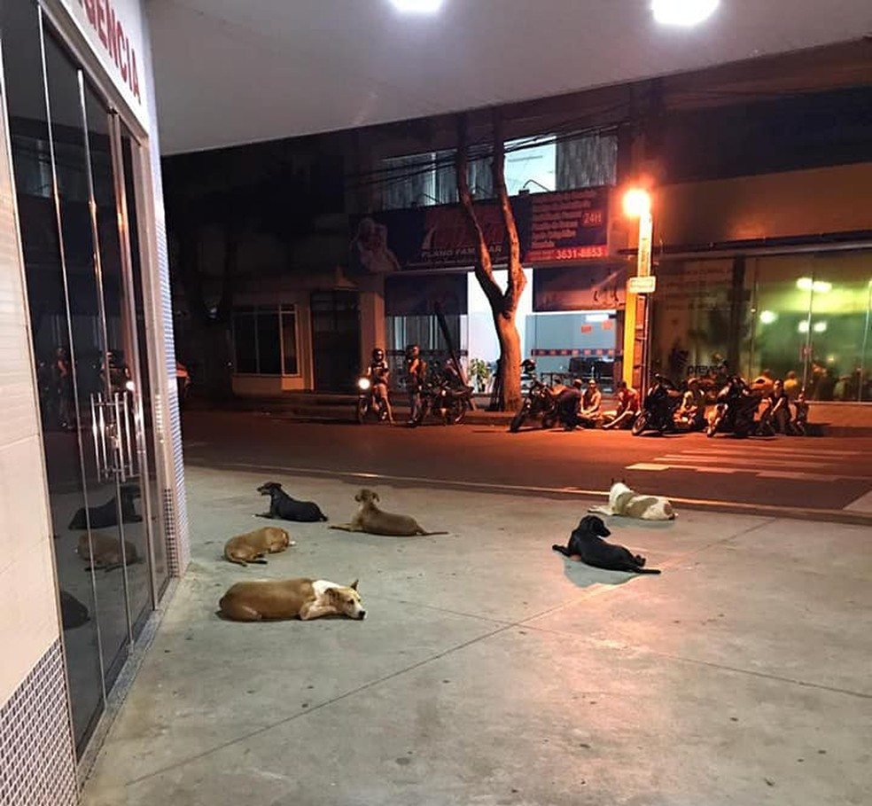 Cachorros ficaram esperando dono na frente de hospital de Cianorte — Foto: ONG Amigos de Patas Cianorte/Divulgação