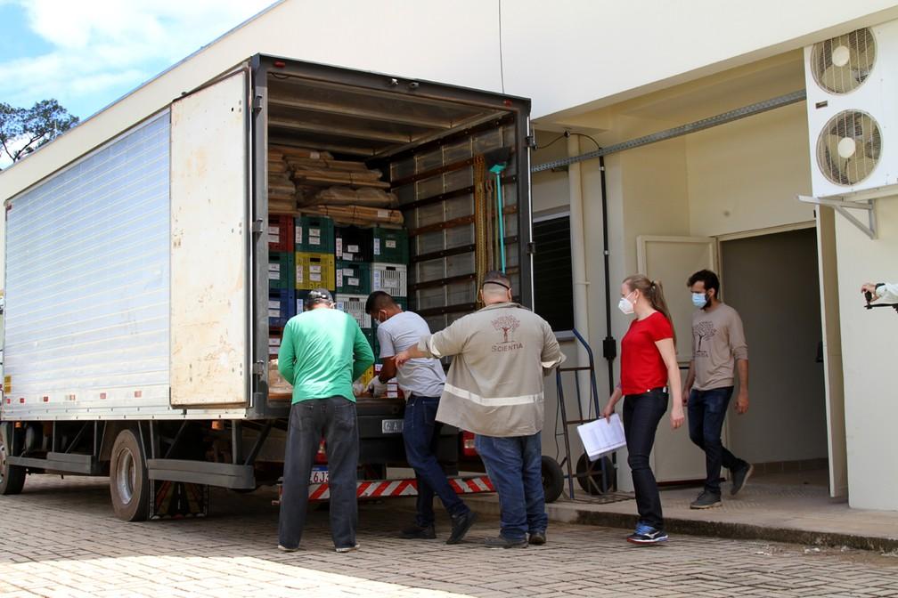 Acervo arqueológico foi levado para a Universidade Federal de Rondônia  — Foto: Cléris Muniz/Agência Imagem News