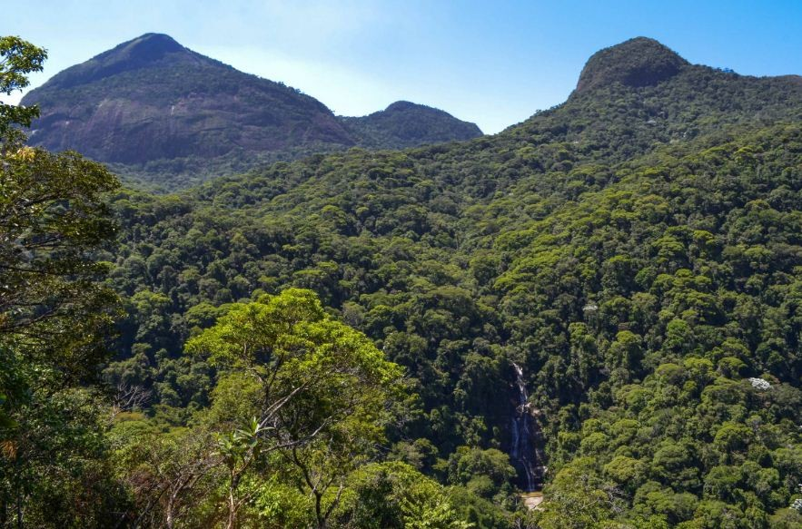Floresta da Tijuca foi plantada a pedido de Dom Pedro II para preservar os recursos hídricos. (Foto: Parque Nacional da Tijuca)