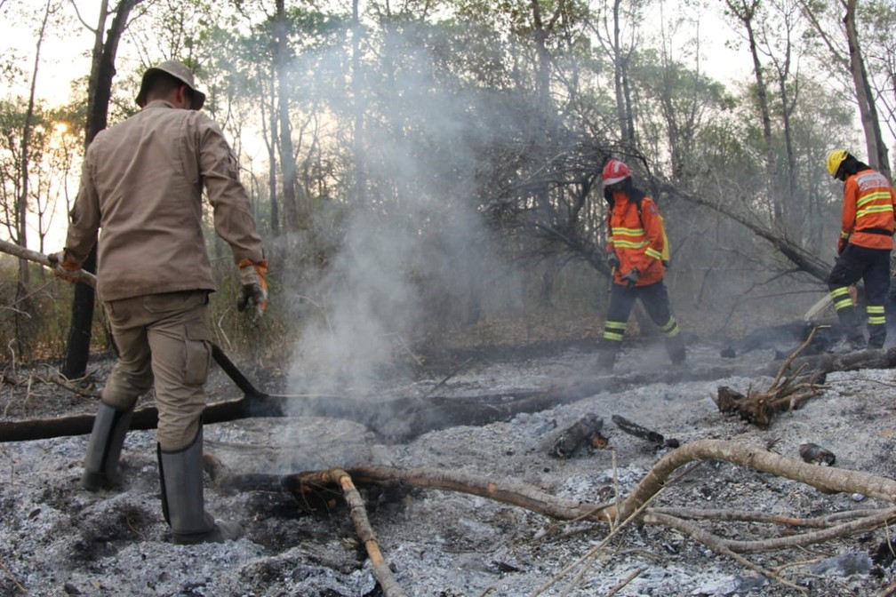 Bombeiros e brigadistas combatem fogo no Pantanal de MS — Foto: Chico Ribeiro/ Governo de Mato Grosso do Sul