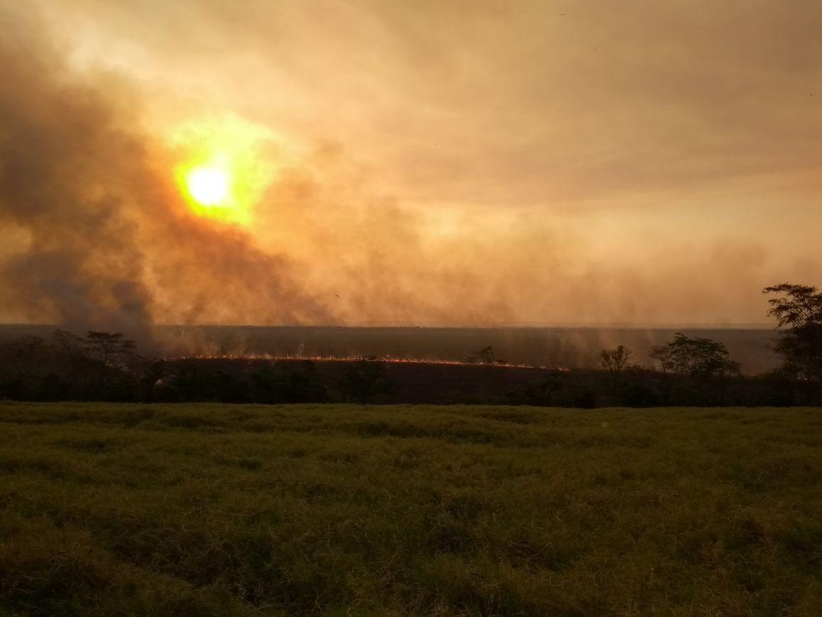 Após duas semanas, incêndio no Parque Nacional de Ilha Grande é encerrado