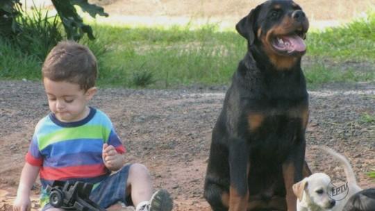 'Ele salvou a vida do meu filho', diz mãe sobre rottweiler que alertou convulsão