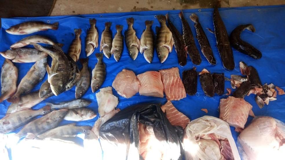 Peixes foram apreendidos em restaurante às margens do Rio Araguaia (Foto: Polícia Civil/Divulgação)