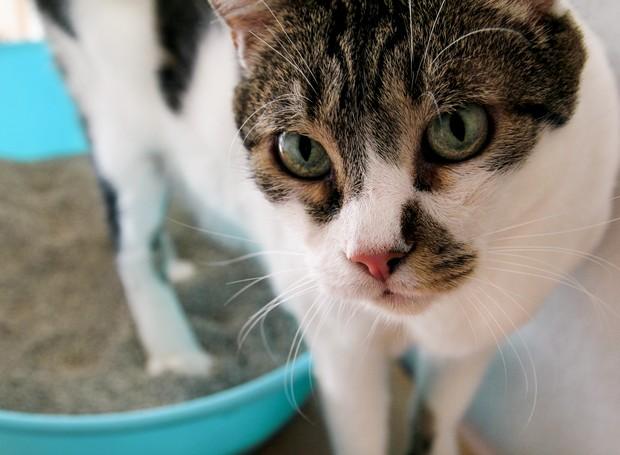 Caixa de areia para gato; como cuidar? (Foto: Thinkstock)
