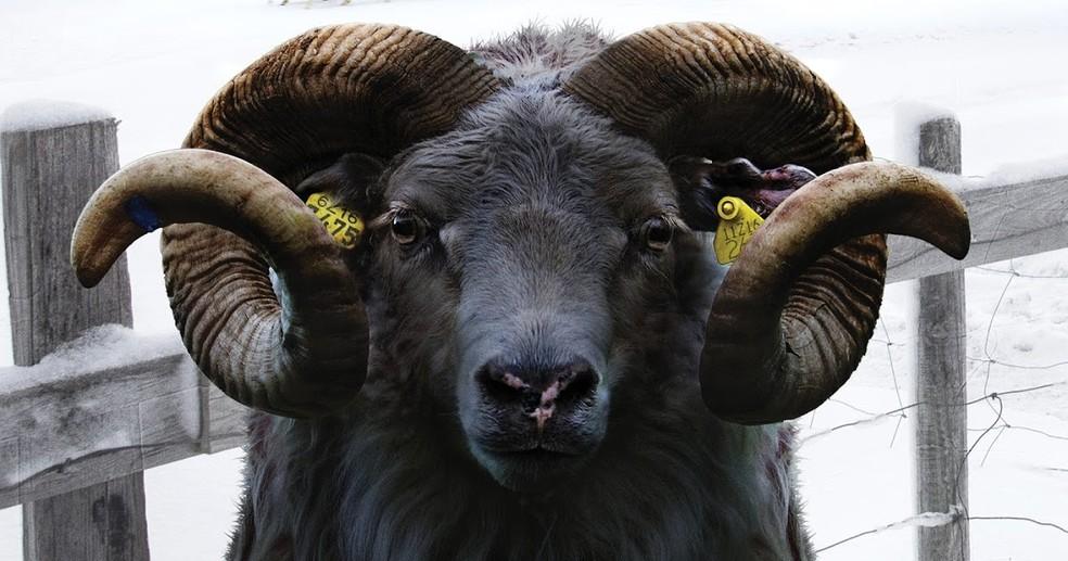 Filme A ovelha Negra (Foto: Sesc Arsenal/ Divulgação)