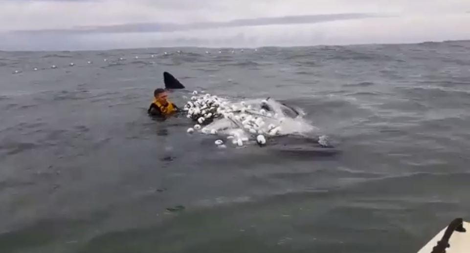 Surfista leva 3h para salvar filhote de baleia preso em rede de pesca em SC; VÍDEO - Radio Evangelho Gospel