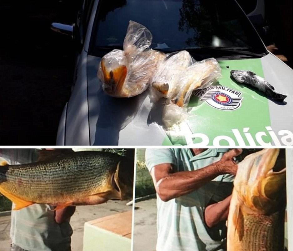 Polícia Ambiental de Pirassununga apreende peixes anunciados para venda na web durante a piracema - Noticias