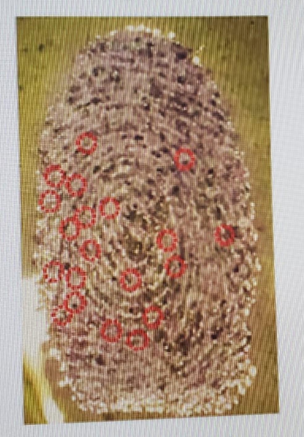 Impressão digital usando goma de cajueiro — Foto: Reprodução